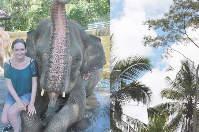 Bali Taro Elephant Safari Lodge Elefant Park Reiten Jungle Dschungel