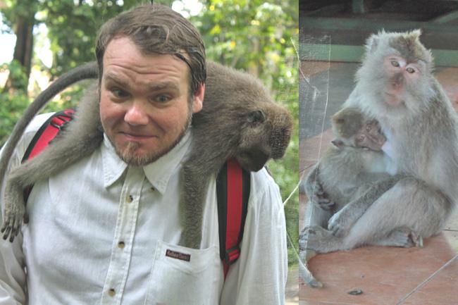 Bali Ubud Monkeyforest Monkey Forest Affenwald Affen Makaken